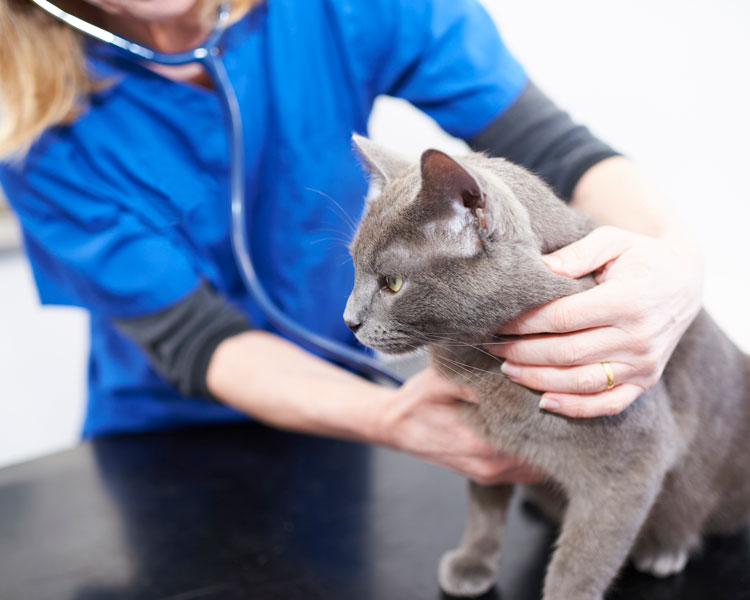 We care for pets in Omagh | Campsie Veterinary Centre
